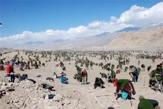 Thiết lập kỷ lục trồng cây tại Ladakh, Ấn độ năm 2010