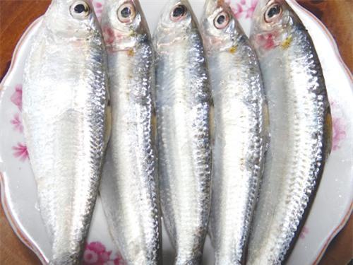Cá trích giàu a xít béo omega 3 - Ảnh: Minh Khôi