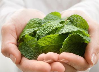 10 thảo dược quý trong điều trị bệnh hô hấp