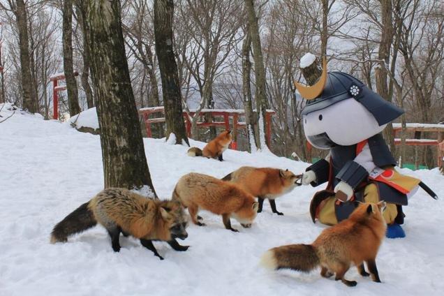 Ngôi làng dành riêng cho... cáo tại Nhật Bản - Ảnh 17