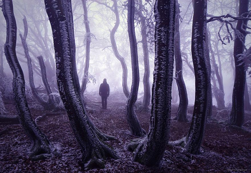 Những khu rừng đẹp huyền bí trên thế giới - Ảnh 15