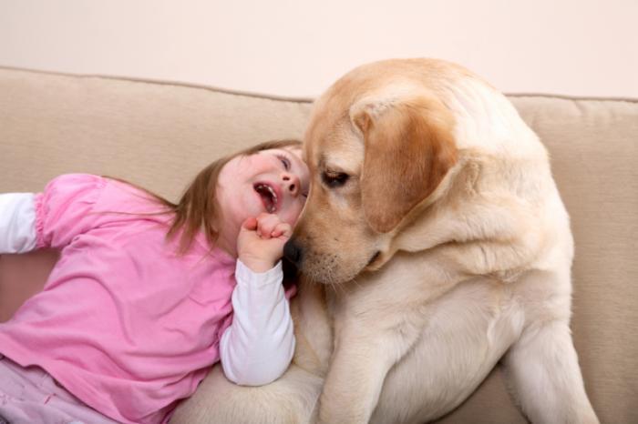 Chó là vật nuôi trung gian gây viêm dạ dày ruột cho người?