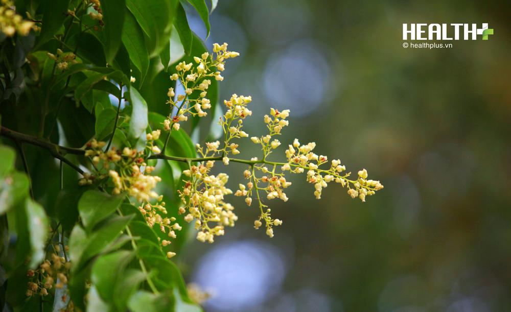 Hà Nội đẹp ngỡ ngàng hoa sấu - mùa lá rụng - Ảnh 3