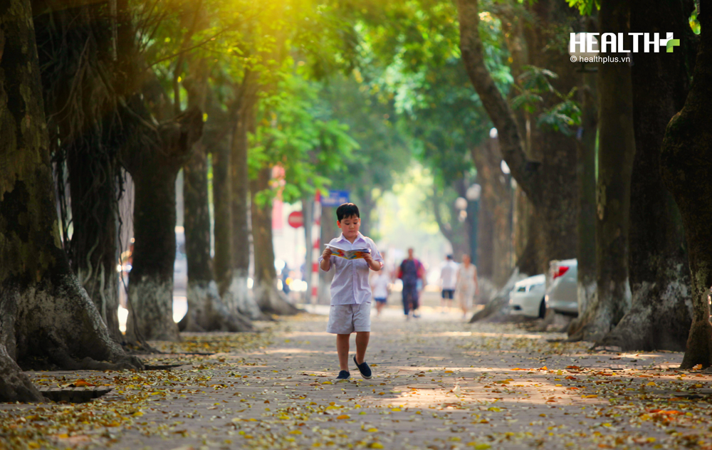 Hà Nội đẹp ngỡ ngàng hoa sấu - mùa lá rụng - Ảnh 8