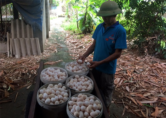 Bí ẩn nguồn gốc trứng gà ta giá rẻ bán đầy chợ - Ảnh 1