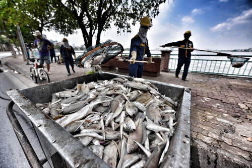 UBND Hà Nội khuyến cáo người dân không ăn cá chết ở hồ Tây - Ảnh 5