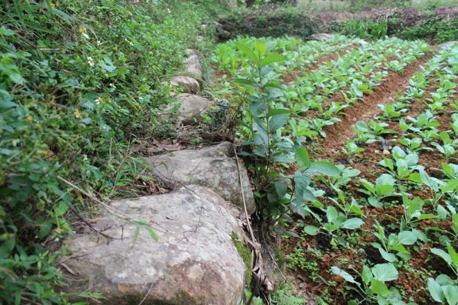 Ngôi làng được quây bằng đá ở Lạng Sơn - Ảnh 5